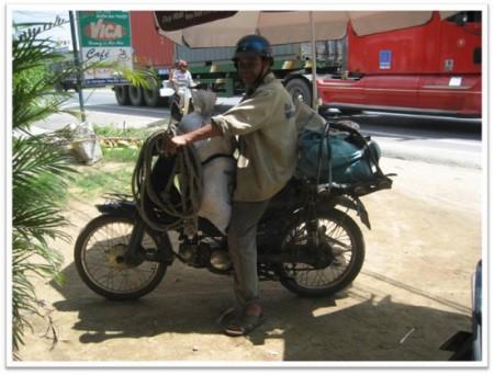 Hình (LĐV): Chân dung một người hái dừa với dụng cụ đầy đủ