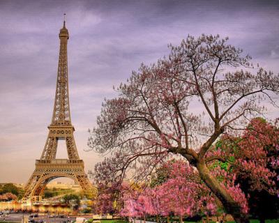 Mùa xuân ở Paris. Ảnh Google