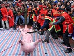 Lễ chém lợn. Ảnh internet