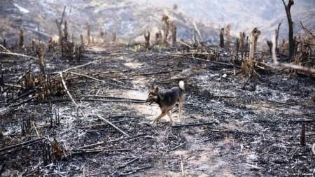 Cánh rừng của Miến Điện bị người Tàu tràn qua tàn phá