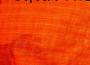 Đi tìm mặt thật của chứng tích da cam
