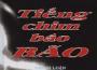 Tiêu Dao Bảo Cự: Người đi tìm bão