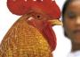 Tiếng gà trưa