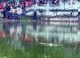 Bệnh tình Cụ Rùa Hồ Gươm và môi trường Xã Hội của con người