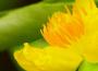 20 loài hoa đẹp chưng trong nhà dịp Tết