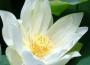 Hoa đạo mùa Phật Đản